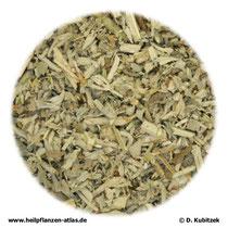 Schwarznesselkraut (Ballotae nigrae herba)