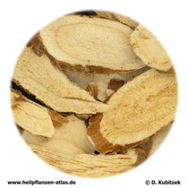 Schnurbaumwurzel (Sophorae flavescentis radix:; TCM: Kushen)