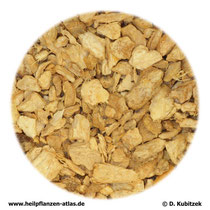 Ingwerwurzelstock (Zingiberis rhizoma)
