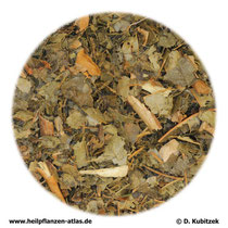 Hamamelisblätter (Hamamelidis folium)