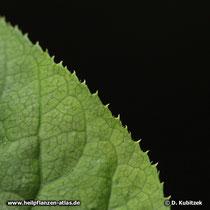 Ginseng (Panax ginseng), Blattrand