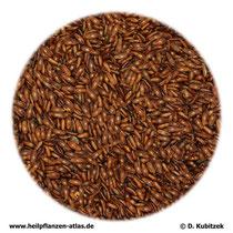 Flohsamen (Psyllii semen)
