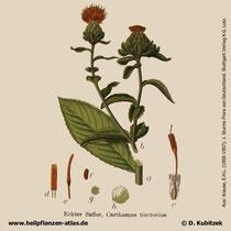 Färberdistel (Carthamus tinctorius), Historisches Bild