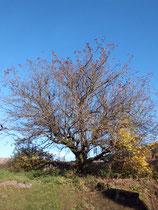 Foto Baum nach der Bildbearbeitung