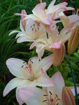 Foto Blumen vorher