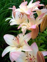 Foto Blumen nach der Bildbearbeitung