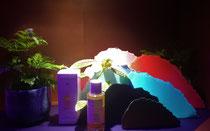 Création petites collines en papier pour Dr. Hauschka en collaboration avec Carlotta de G.