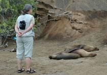 Bereits der erste Landausflug (Punta Cormorant auf Floreana) vermittelte einen Eindruck dessen, was Galapagos so einzigartig macht: Die ruhenden Galapagos Seelöwen liessen sich durch uns überhaupt nicht stören (Abstand muss natürlich eingehalten werden).