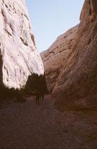 """Einer der ersten Pioniere, Elijah Cutler Behunin,. lenkte 1882 den ersten Planwagen durch die Capitol Gorge (nach einer Verbreiterung war die Schlucht kaum breiter als das Pferdegespann).. Diese Strecke wurde als """"Blue Dugway"""" bekannt (Farbe des Gesteins)"""