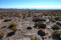 Und hier noch einmal ein Bild von dieser eindrucksvollen, wasserarmen Landschaft auf der Rückfahrt von den beiden Seen Laguna Miscanti und Laguna Miniques nach San Pedro de Atacama