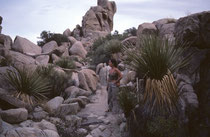 Im Park hat es ca. 700 verschiedene Pflanzenarten, wie z. B. Pinyon-Kiefern (u.a. Pinus edulis), Kalifornischer Wachholder (Juniperus californica), Sonoran scrub oak (Quercus turbinella), Tucker's oak (Quercus john-tuckeri) oder andere Palmlilien (Yuccas)