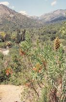 Ein markantes Wahrzeichen des  La Campana NP ist der Cerro La Campana, ein 1880 m hoher Berg, den Charles Darwin auf seiner zweiten Reise mit der Beagle im Jahre 1834 bestiegen hat.