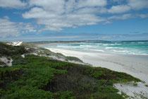 """Dies ist das ca. 5 km langen """"Bales Bay Aquatic Reserve"""", welches 1971 eingerichtet wurde, um """"eine wichtige Zuchtkolonie des Australischen Seelöwen zu schützen"""". Der Fang jeglicher Meeresorgansimen ist, wie bei der Seal Bay, in diesem Reservat verboten."""
