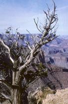 Der Grand-Canyon-Nationalpark, ein Naturwunder der Erde, besteht hauptsächlich  aus der ca. 450 km langen Schlucht des Grand Canyon die während Jahrmillionen vom Colorado River ins Gestein des Colorado-Plateaus gegraben wurde (s. auch USA III und USA IV).
