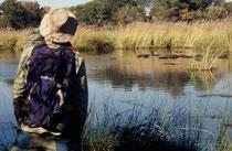 Nicht weit von unserem Camp entfernt, gelangten wir auf einer unserer Morgenexkursionen durch dichtes Schilf zu einem stillen Teich, in dem eine ganze Flusspferdherde ruhte, nachdem sie in der vorangehenden Nacht, wie Kühe in der Umgebung geweidet hatte.