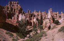 Wie im Jahre 1982, liessen wir es uns auch 1999 nicht nehmen, zusätzlich zu unserem Ritt die faszinierende Felslandschaft und ihre Tier- und Pflanzenwelt des Bryce Canyon NPs auch auf einer Fusswanderung auf den Grund des Canyons zu erkunden.