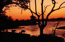 Die Dunkelheit kommt in Afrika schnell. Deshalb war ich sehr froh, dass das Licht nach Sonnenuntergang gerade noch ausreichte, um diese Gruppe Elefanten beim Trinken am Chobe Fluss aufzunehmen. Das sind Bilder und Erlebnisse, die man nie mehr vergisst...