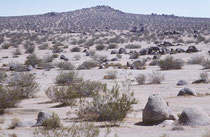 Auf der Fahrt vom Joshua Tree NP zum Death Valley Nationalpark durchquerten wir einmal mehr trockenes, heisses Wüstengebiet.