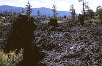 Süd-Oregon und Nord-Kalifornien sind reich an Zeugen vulkanischer Aktivität. Wir besuchten Lava Butte und den Lava Cave Forest. Hier stauten Bäume die Lava auf. Das Gestein erstarrte, die Pflanzen verbrannten und so blieben Löcher im Boden zurück.