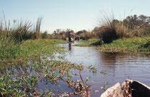 Das Wasser des Okavango stammt aus Angola (Regenzeit im Sommer = Jan.-Feb.), fliesst zuerst 1200 km in ca. einem Monat, ergiesst sich dann in den nächsten 4 Monaten in das 250 km x 150 km grosse Delta und versickert oder verdunstet im Kalaharibecken.