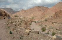 Auf einer Exkursion ins pittoreske Wadi Dana sahen wir immer wieder Greifvögel (Gänsegeier, Steinadler, Schlangenadler, Steppenadler, Schreiadler) teilweise in grosser Zahl (Falkenbussarde), welche sich, die Thermik nutzend, in die Höhe schraubten.