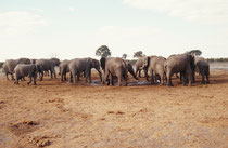 Neben der Strasse entdeckten wir diese Ansammlung von Elefanten an einem Wasserloch. Zu unserer Überraschung handelte es sich ausschliesslich um Bullen unterschiedlichen Alters. Es war r beeindruckend zu sehen, wie sie völlig friedlich den Durst löschten.