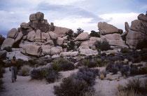 Neben den Joshuabaum-Wäldern bietet der Park eine der interessantesten geologischen Formationen, die man in den kalifornischen Wüsten findet. Es herrschen kahle Felsen vor, die meist in einzelne Felsformationen aufgebrochen sind. (s. auch Galerie USA IV).