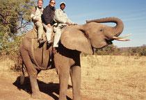Wir sitzen auf einem Afrikanischen Elefanten und machen uns auf, zu einer Safari in den Busch auf dem Elefantenrücken. Diese Elefantensafaris wurden bei unserem Besuch in der Stadt Victoria Falls in Zimbabwe von einem initiativen Unternehmer angeboten.