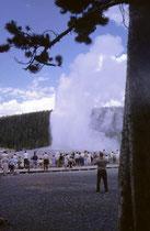 """Der Yellowstone NP ist berühmt für seine vulkanogene Landschaft mit Geysiren, Fumarolen, Schlammtöpfen und heissen Quellen. Der bekannteste Geysir ist der """"Old Faithfull"""". Er speit seit dem Jahre 1870 regelmässig seine ca. 30 – 55 m hohe Fontäne aus."""