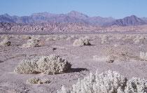 Der Death Valley National Park liegt in der Mojave-Wüste, östlich der Sierra Nevada und erstreckt sich über eine Fläche von 12.000 km².  Das Death Valley ist die Wüste der Extreme: Am heissesten, trockensten und am tiefsten.