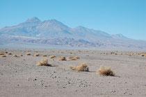 Auf der Fahrt zur Salar de Atacama. Die geringe Regenmenge erlaubt keinen dichteren Pflanzenwuchs.