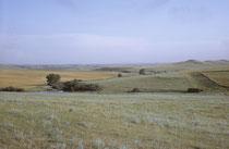 Auf der Weitereise Richtung Bismark in North Dakota, hörte der Wald fast schlagartig auf. Zuerst fuhren wir stundenlang in eine unermessliche Weite flachen Gras- und Getreidelandes hinein und gelangten schliesslich in die hügelige Prärie.