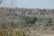Trockene Felsgebiete, Seen und kleinere Wasserläufe, die im Nationalpark von Trockenwäldern gesäumt werden. Und die Festung Ranthambhor aus dem 10. Jahrhundert, welcher der Park seinen Namen verdankt, die sich majestätisch über dem Schutzgebiet erhebt.