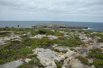 Das Cape du Coedic ist der südwestlichste Punkt von Kangaroo Island. Das Areal liegt im 326 km2 grossen Flinders-Chase-Nationalpark. Am 6. 12. 2007 entzündeten Blitze ein Buschfeuer, bei dem 19.542 ha Busch im Nationalpark verbrannten.