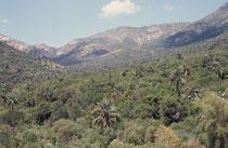 Der 160 km nördlich von Santiago gelegene La Campana National Park  repräsentiert den Landschaftstyp des chilenischen Zentrallandes (Küstengebirges), mit einem der letzten grossen natürlichen Bestände der Honigpalme (Jubaea chilensis).