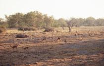 Frühmorgens fuhren wir durch eine feucht-neblige Landschaft, ähnlich einer englischen Parklandschaft - wenn da nur nicht die Impalas und Paviane gewesen wären, die, als sich der Nebel lichtete, die Strahlen der Morgensonne genossen.