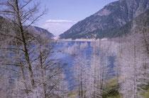 Am 17. August 1959 (also vier Jahre vor unserem Besuch) bebte die Erde in SW Montana während 30–40 Sek. mit einer Stärke von 7,3-7,5. Ein gewaltiger Erdrutsch staute den Madison River und so entstand der Quake Lake. Beim Zelten dort war uns etwas mulmig.