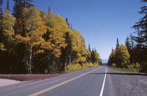 """Spektakuläre Herbstfarben verwandeln selbst Fahrten durch die sonst eher wenig attraktiven Bergwälder Utahs in einen """"scenic drive"""". Bei den Bäumen dürfte es sich um Amerikanische Espen handeln."""