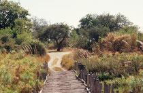 Das Moremi Game Reserve (= Wildreservat), ein 5000 km2 grosser Nationalpark im Nordosten des Okavangodeltas, besteht aus trockenen Gebieten, Sumpflandschaften, kleinen Seen und Flüsschen. Diese überquert man auf abenteuerlichen Knüppelbrücken.