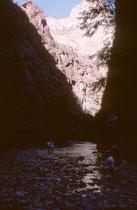 Der 579 km² grosse, seit 1919 bestehende Zion-Nationalpark im SW Utahs an der Grenze zu Arizona besteht aus einer schluchtenreichen Landschaft mit teilweise schwierig zu begehenden Canyons und einer Vielzahl unterschiedlicher Lebensräume.