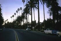 Hier sind wir in Beverly Hills. Die Straßen sind mit Palmen und gepflegten Vorgärten gesäumt. In den prächtigen Häusern wohnen prominente amerikanische Schauspieler, Regisseure und anderer wohlhabender Einwohner von Los Angeles.