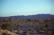 Typische Landschaft auf der Fahrt vom Grand Canyon Nationalpark (Arizona) durch das südliche Nevada zum Death Valley National Park (s. dazu auch Galerien USA II und USA IV). Es war schön, nach dem winterlichen Beginn der Reise, T-Shirts tragen zu können.