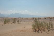 In diesem Wadi machten wir auf unserem Weg vom Dana NP nach Wadi Musa und Petra eine kurze Exkursion in der Hitze des späteren Vormittags und sahen u.a. die Wüstenprinie (Scotocerca inquieta) und eine Gruppe von Graudrosslingen (Turdoides squamiceps).