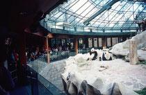 Anlage für Pandas im Zoo von Chiang Mai. Die Besucher dieser Anlage müssen allerdings noch einen zusätzlichen Eintritt bezahlen. Aber offenbar sind sie bereit, dies zu tun, um die von China ausgeliehenen Pandas zu sehen.