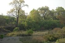 Immer wieder kommt man an breite Flusstäler. An den Ufern stehen saftig grüne Flusswälder. Hier haben wir lange vergeblich auf einen Tiger gewartet. Wir wussten, dass er in der Nähe sein musste, weil wir den Warnruf eines Sambarhirsches gehört hatten.