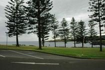 """Kiama liegt etwa 120 km südlich von Sydney in New South Wales und ist bekannt wegen des seines sog. """"Blowholes"""", wahrscheinlich das grösste der Welt. In der Nähe der Sehenswürdigkeit stehen diese prächtigen Norfolk-Tannen (Araucaria heterophylla)."""