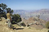 """Auch im Jahre 1982 standen wir erneut staunend am """"North Rim"""" des 450 km langen Grand Canyon in Arizona, wovon 350 km innerhalb des Nationalparks (s. auch Galerien USA II und USA IV). Er ist zwischen 6 und 30 km breit und bis 1800 m tief."""