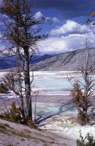 Aufgrund immer neuer Ablagerungen wechseln Fliessrichtung, Temperatur, Farben ja das ganze Erscheinungsbild der Terrassen von Jahr zu Jahr. (Weitere Bilder aus dem Yellowstone NP befinden sich in der Galerie USA III.)