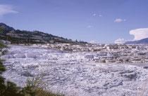 Die Sinterterrassen bei Mammoth Hot Springs wurden 1871 entdeckt. Hier gleitet ca. 70 C warmes Wasser aus heissen Quellen über die Terrassen. In den flachen Becken siedeln sich Algen und Bakterien an, mit unterschiedlichen Farben je nach Temperatur.