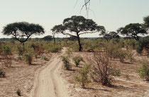 Mit einer Fläche von 10'566 km² ist der Chobe National Park der zweitgrösste National Park Botswanas. Der westliche Teil - Savuti - war ursprünglich ein See, dessen Wasserzufuhr aber vor langer Zeit unterbrochen wurde. Heute ist es eine grosse Savanne.